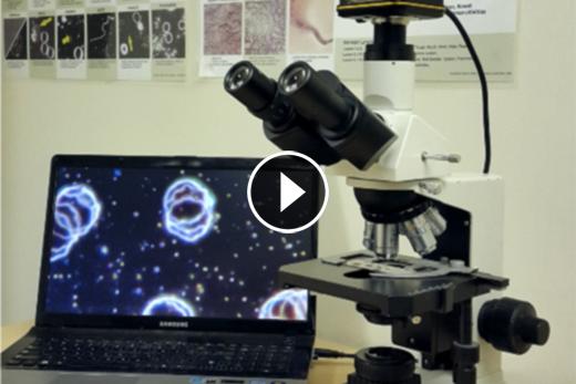 Best Microscopes